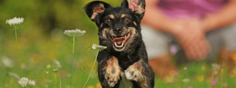 utrzymanie-psa